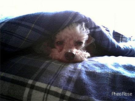 Image of Needing Rest