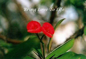 Bring Love to Life
